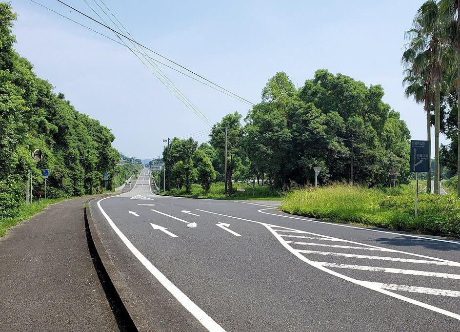 鹿児島ロマン街道でヤシの木と開聞岳が立ち並ぶ景色1