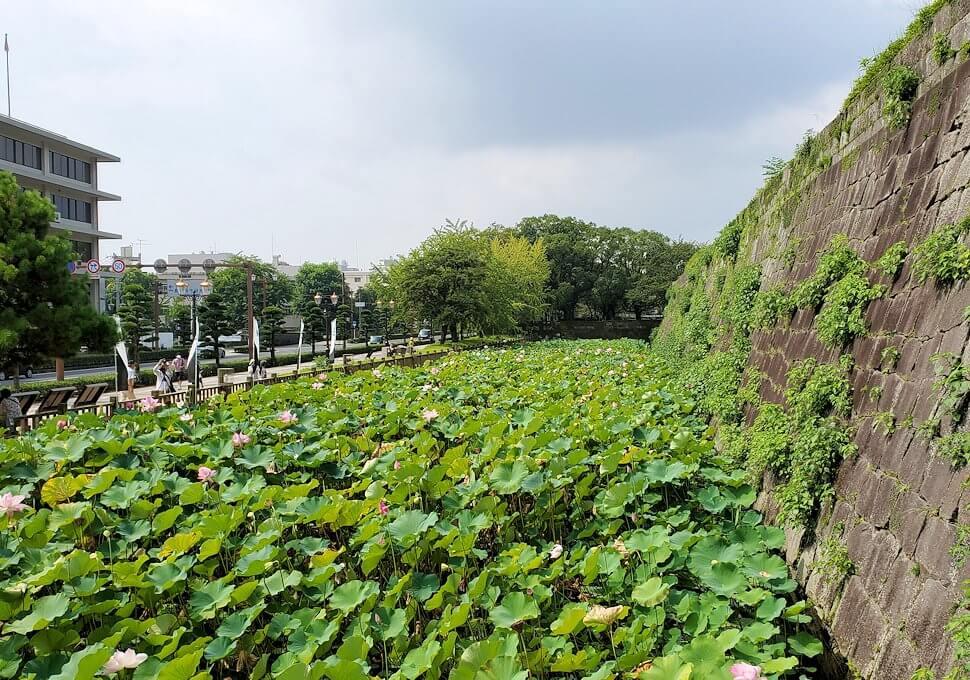 鶴丸城跡地の正門「御楼門」の前に拡がる水連