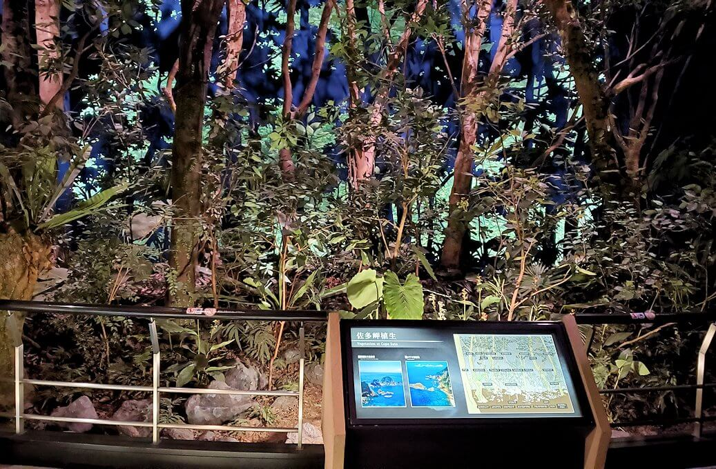 鹿児島南部の生態系