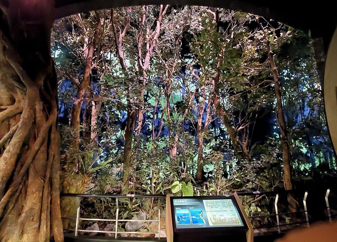 鹿児島南部の生態系1