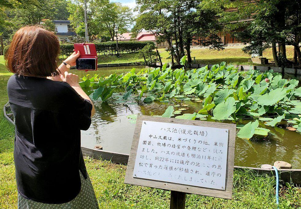 旧島松駅逓所周辺にあるクラーク博士の記念碑横にあった蓮が咲く池を写真に撮る