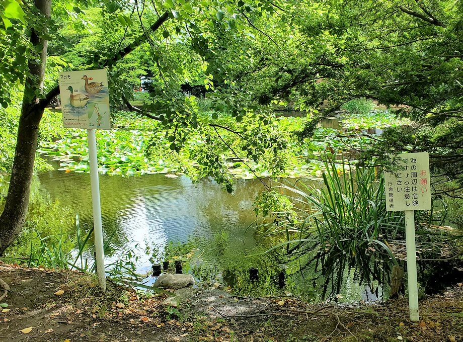 北海道庁敷地内の池