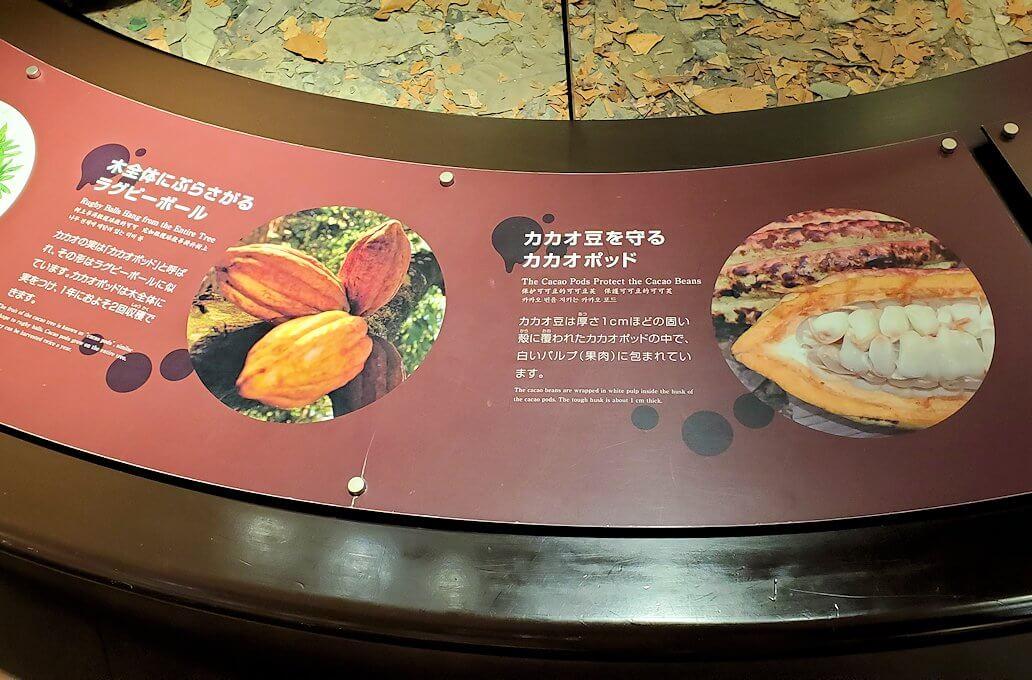 ロイスチョコレート:ブースに展示されている、カカオの木の説明