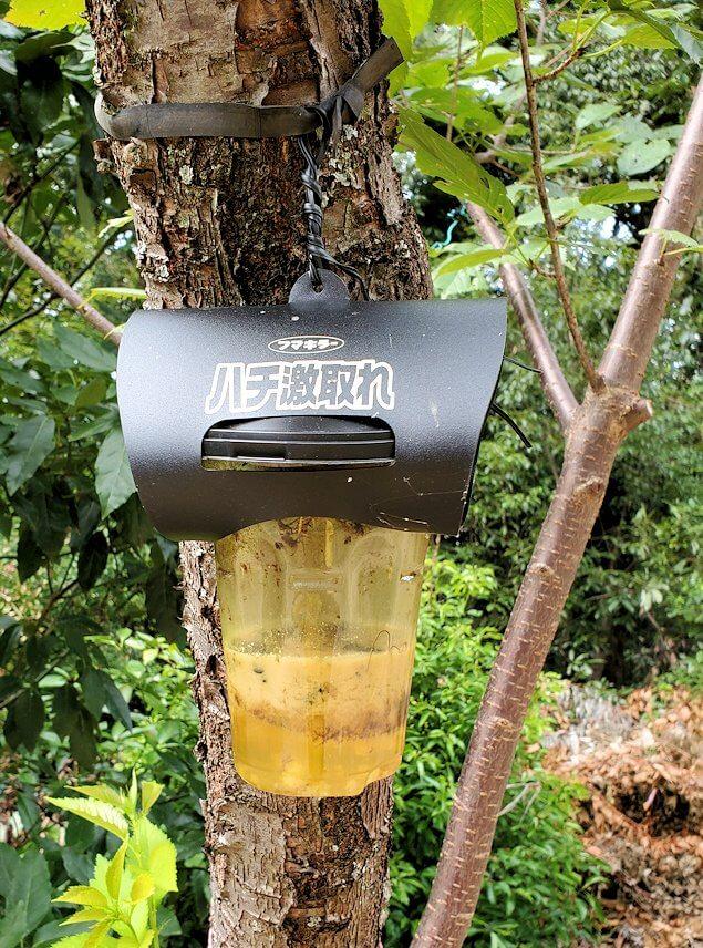 松山城裏手の林にあった、ハチ取り器