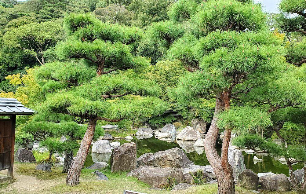 「二之丸史跡庭園」内に生える松