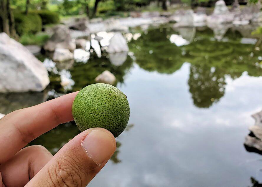 「二之丸史跡庭園」内で食べる酢橘