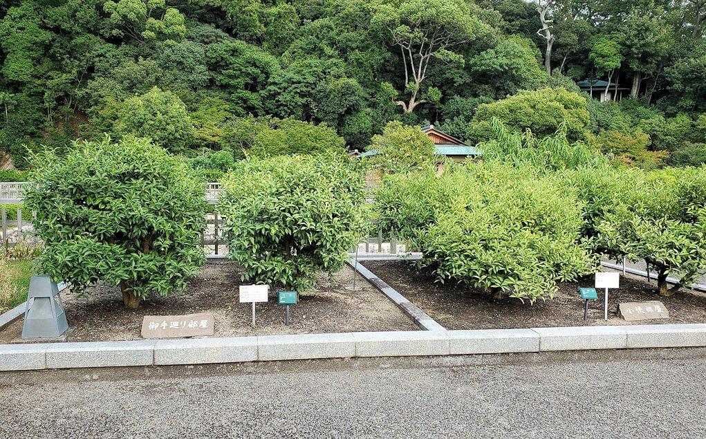 二之丸史跡庭園に植えられている柑橘類