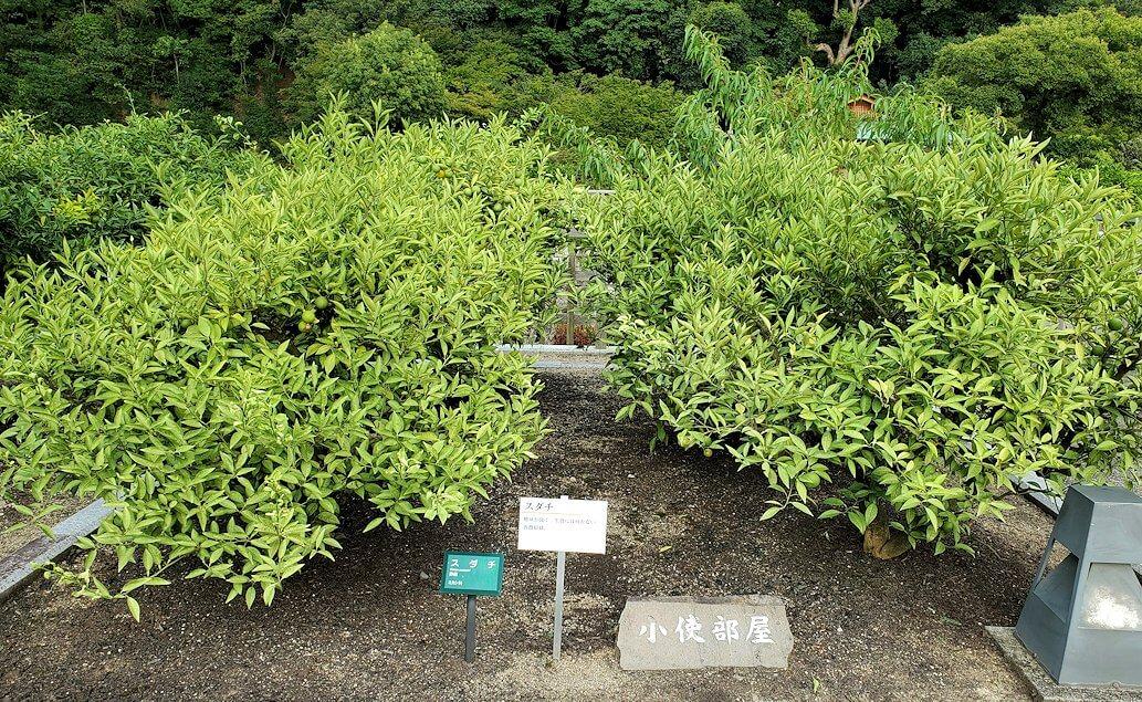 二之丸史跡庭園に植えられている柑橘類1