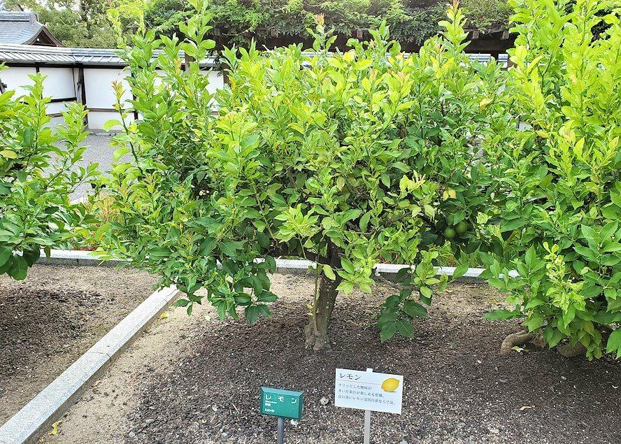 二之丸史跡庭園に植えられている柑橘類2