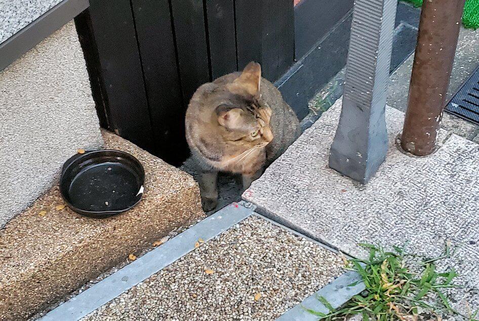 道後温泉本館近くに居た野良猫ちゃん